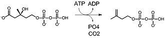 Mevalonate pathway - Image: Mdd 2