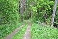 Meža ceļš, Skrundas pagasts, Skrundas novads, Latvia - panoramio.jpg