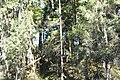 Mežs Kangaru kalnos - panoramio.jpg