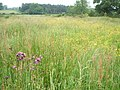 Meadows north of the River Bure on the Blickling Estate - geograph.org.uk - 488724.jpg