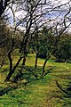 Meijendel spring 2001 09.jpg