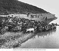Men herding reindeer along the shoreline near Mountain Village, circa 1914 (AL+CA 2838).jpg