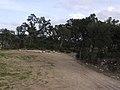 Menhir dels Palaus (Agullana) - Départ sentier.jpg