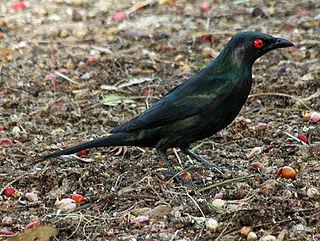 species of bird