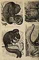 Meyers Konversations-Lexikon - eine Encyklopädie des allgemeinen Wissens (1890) (14592345859).jpg