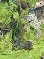 Miniature waterfall, Clyth Harbour. - geograph.org.uk - 1365357.jpg