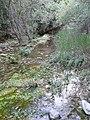 Molins de Balanyà - molí de més avall P1110983.JPG