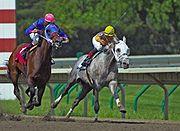 Oblíbená koňská disciplína – dostihy.