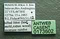 Monomorium fisheri casent0173602 label 1.jpg