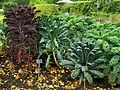 Montréal Jardin botanique 582 (8213127039).jpg