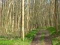 Moor Wood - geograph.org.uk - 768039.jpg