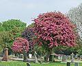 Moorthorpe Cemetery (26686442534).jpg