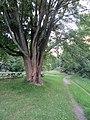 Morgan Arboretum 01.jpg