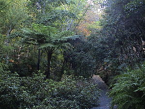 Mount Lofty Botanic Garden - Image: Mount Lofty Botanic Garden Autumn 2