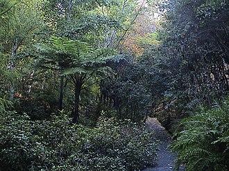 Mount Lofty Botanic Garden - Image: Mount Lofty Botanic Garden Autumn 2