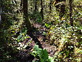 Mud North Coast Trail.JPG