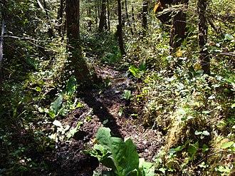 North Coast Trail - Image: Mud North Coast Trail