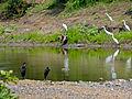 N'wanetsi River (12011739286).jpg