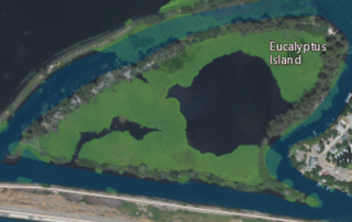 Eucalyptus Island Island in California