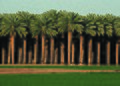NRCSAZ02058 - Arizona (399)(NRCS Photo Gallery).jpg