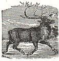 NSRW Reindeer.jpg