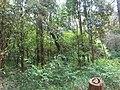 Nairobi Arboretum Park 21.JPG
