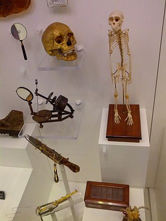 National Museum of Health and Medicine - A typical display case at the museum. Clockwise from top right: the skeleton of Able, a rhesus macaque who was among the first primates ever to be sent to space; a box containing the tumor that killed Ulysses S. Grant, sectioned; a hand-cranked surgical saw used for cutting through bone in amputations, etc; a gilded skull, the first item in the museum's catalogue – original owner unknown,