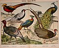Natural history of the animal kingdom for the use of young people (Plate XXIII) (5974393185).jpg