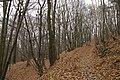 Nature reserve Šance in autumn 2012 (16).JPG
