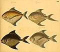 Naturgeschichte in Bildern mit erläuterndem Text (Taf. XXII) (6058658765).jpg