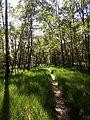 Naturschutzgebiet Holmmoor bei Quickborn 04.jpg