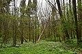 Nekhvoroshcha Volodymyr-Volynskyi Volynska-Nekhvoroshschi nature reserve-view of the central part-4.jpg