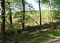 New planting, Swinnerton Old Park - geograph.org.uk - 1309815.jpg