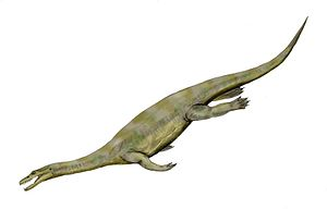 Nothosaurus - N. mirabilis