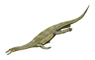 Nothosaur order of Mesozoic aquatic reptiles