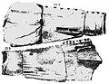 Occidens portlocki Portlock 1843.jpg
