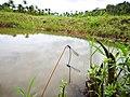 Odonata habitat.jpg