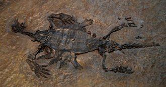 Odontochelys - Cast of the paratype specimen (IVPP V 13240)