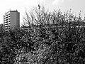 Okolice Grota Roweckiego - panoramio.jpg