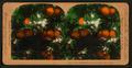 Orange Blossoms and Fruit, Los Angeles, Cal., U.S.A, by Singley, B. L. (Benjamin Lloyd) 6.png