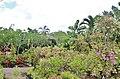 Orchid Gardens Bali, Indonesia - panoramio (13).jpg