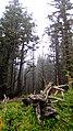Oregon Coast (8238631954).jpg
