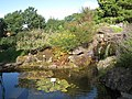 Oslo Botanical Garden - IMG 8973.jpg