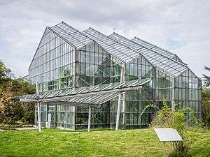 Botanischer Garten der Universität Osnabrück - Botanic Garden of Osnabrueck, tropical glasshouse