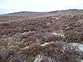 Overgrown track on moorland - geograph.org.uk - 1523782.jpg