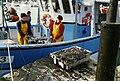 Pêche à la seiche (2).jpg