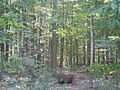 Pădurile Codrii.jpg