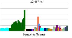 PBB GE Ĉ3CL1 203687 ĉe tn.png