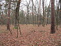 PP Černý orel, les VIII.jpg