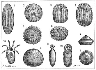 Holometabolism - Various insect eggs.